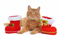 X-mas Kitten Stock Images