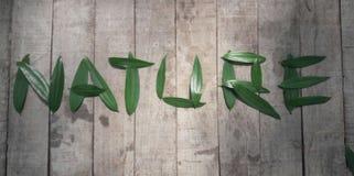 & x22; NATURE& x22; typografie met acaciablad tegen een rustieke houten achtergrond wordt geschreven die Royalty-vrije Stock Afbeeldingen