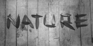 & x22; NATURE& x22; typografie met acaciablad tegen een rustieke houten achtergrond wordt geschreven die Stock Foto's