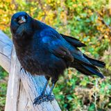 Nevermore stock photography