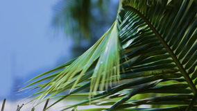 1920x1080 - palm leaves close-up. HD 1920x1080 - palm leaves close-up. Tropical abstract background stock footage