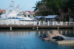 & x22;Puerto aventura& x22;. View with boats and water, sea lions on the scene Royalty Free Stock Photos