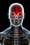 X-ray Anatomy on Black Royalty Free Stock Image
