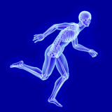 X-ray anatomy of running man Royalty Free Stock Photography