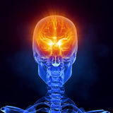 X-ray brain medical scan front view. Glowing brain inside skull frontal view royalty free illustration