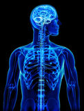 X-ray with brain and spinal cord concept Royalty Free Stock Photos