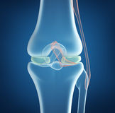 X-ray concept of knee joint closeup view Royalty Free Stock Photo