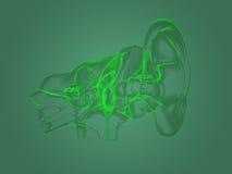X-ray ear anatomy Stock Image