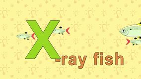 X-ray Fish. English ZOO Alphabet - letter X. Animation English alphabet. Letter X and word  X-ray Fish. 2D handmade animation stock footage