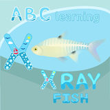 X is for X ray fish vector Letter X font Antarctic animal X-ray fish Transparent body & visible skeleton realistic character North. Vector illustration of X ray Royalty Free Stock Photos