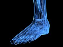 X-ray foot Royalty Free Stock Images
