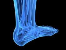 X-ray foot Stock Photography