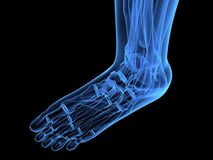 X-ray foot Stock Images