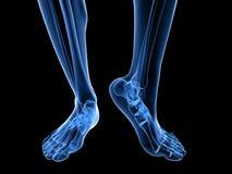 X-ray foot illustration Stock Photos