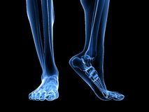 X-ray foot illustration Royalty Free Stock Image