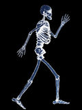 X-Ray of Full Human Skeleton on Black Background Royalty Free Stock Photography