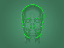 X-ray head anatomy Stock Image
