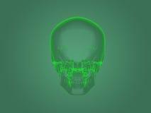 X-ray head anatomy Stock Images