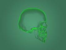 X-ray head anatomy Stock Photography
