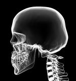 X-ray head and neck Royalty Free Stock Photos