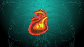 X-ray Heart in action Loopable Hd video stock video