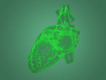X-ray heart anatomy Royalty Free Stock Images