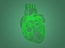 X-ray heart anatomy Royalty Free Stock Photography