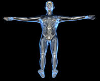 X-ray of a human body Royalty Free Stock Photo