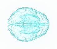 X-ray human brain in blue. Royalty Free Stock Photos