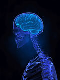 X- ray human brain, pain and skeleton. Human brain left view with skeleton stock photography