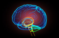 X- ray human brain vector illustration