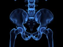 X-ray of a human hips. 3d rendered x-ray illustration of  human hips Stock Photo