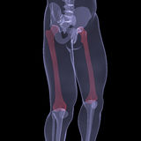 X-ray of human legs. Render on a black background Royalty Free Stock Images