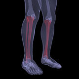 X-ray of human legs. Render on a black background Royalty Free Stock Image