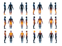X ray human male female body. Anatomy concept. Isolate, 3d render Royalty Free Stock Images