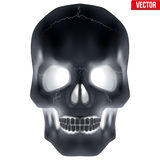 X-ray Human skull Stock Image