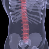 X-ray of the human spine. Render on a black background Stock Image
