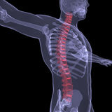 X-ray of the human spine. Render on a black background Royalty Free Stock Photos