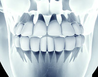 X-ray image of a jaw with teeth Stock Image