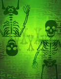 X-ray Light Skeleton Royalty Free Stock Photos