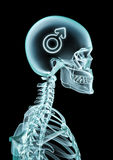 X-ray male thinking Royalty Free Stock Photo