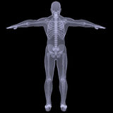 X-ray of man. Render on a black background Royalty Free Stock Photography