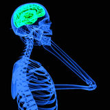 X-ray of a person using mobile phone Royalty Free Stock Photography