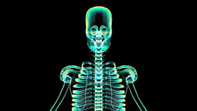 X-Ray Scan of Human Skeleton Animation (HD) stock footage
