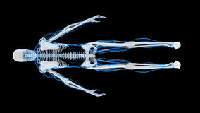 X-Ray Scan of Human Skeleton (HD) stock video