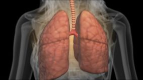 X-ray scanner of lungs stock footage