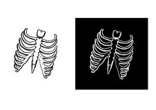 X-ray and skeleton of human rib cage Stock Photo