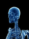 X-ray style skeleton Royalty Free Stock Photo