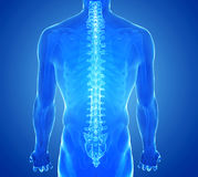 X-ray view of Human Spine royalty free stock image