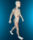 X ray of walking human body and skeleton Royalty Free Stock Photos
